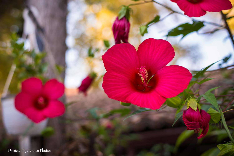 2015-09-19 Wedding Day Desislava i Valentin-537b